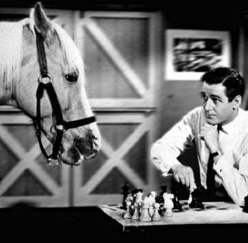 One of the most famous horses in television history is Mr. Ed. Which is NOT a true Mr. Ed fact?