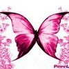 Butterfly Lovebugz photo