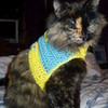 my kitty! (in the sweater i made her) marglo photo