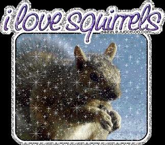 HA HA HA HA HA i प्यार squirrels!!!!