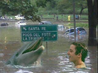 Flipper in the highway after the rain last week