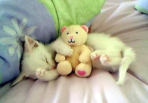 upendo is a cozy teddy-bear ♥