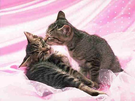 Kissing Kittens xXxXxX.<3.XxXxXx ^^