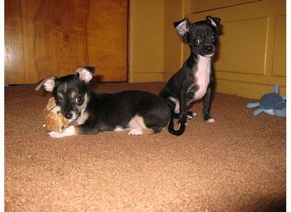 who has the cutest pic of their dog অথবা কুকুরছানা if আপনি think আপনি do post it
