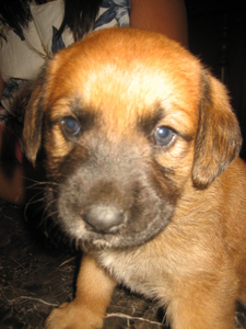 I have a german shepherd labrador retriever but i have to give him away in the winter (sniff)