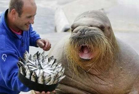 Walrus!!! Oh yeah and he isnt getting that cake because its his birthday, hes getting it because he just won the BEST-MUSTACHE-IN-THE-WORLD competition