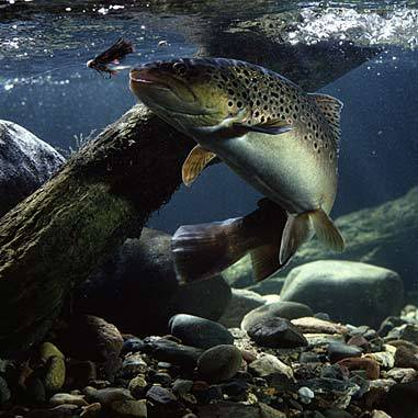 Is fishing considered hunting animal rights answers for Is fish considered meat