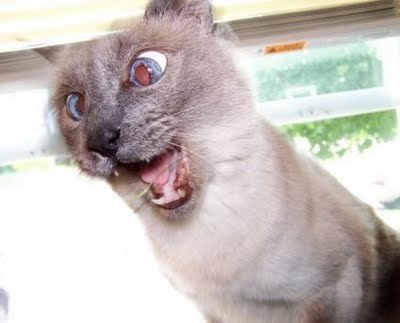 What do wewe think this cat is saying?