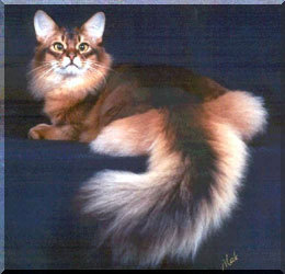 I - Ichabod Okay it took me a while to find this breed but it does exist. At first I thought that