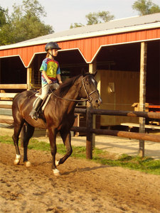 My brown horse at a stable where I ride named Thunder, and that is NOT me on it.