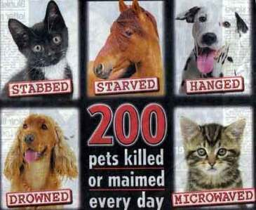 I think it is HORRIBLE what people do to animals! It disgust's me what people do to animals! I am rig