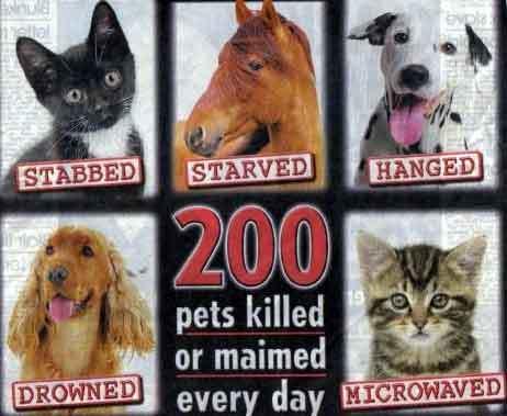 animal testing on dogs. some cool animal testing