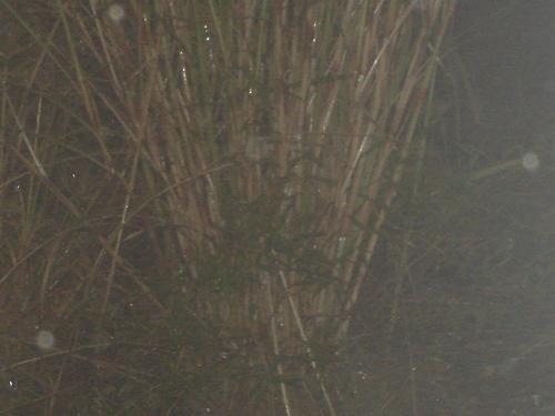 ALIEN AEROSTOCKIAN VANGUARD nube IN THE NIGHT #2
