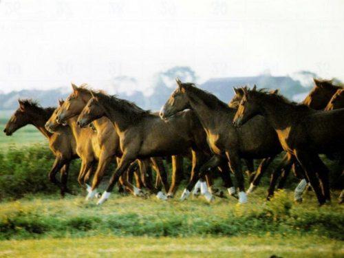 Brown horse achtergronden