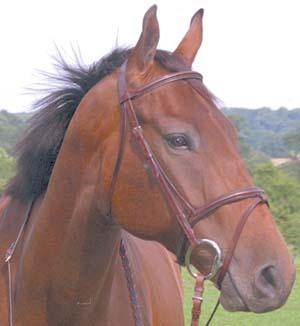 Brown caballos