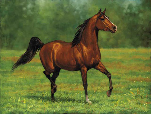 Brown chevaux