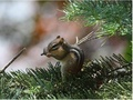 Squirrell  - wild-animals photo