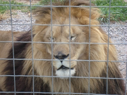 WI Big Cat Rescue and Educational Center