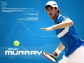 Andy Murray - andy-murray wallpaper