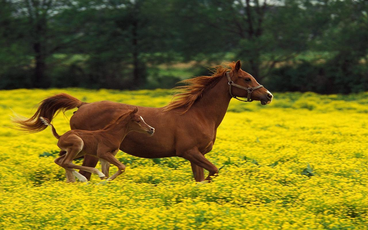 spring wild horse wallpaper - photo #12