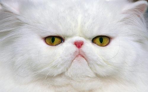 động vật widescreen hình nền
