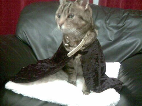 Bat Cat!!!!!