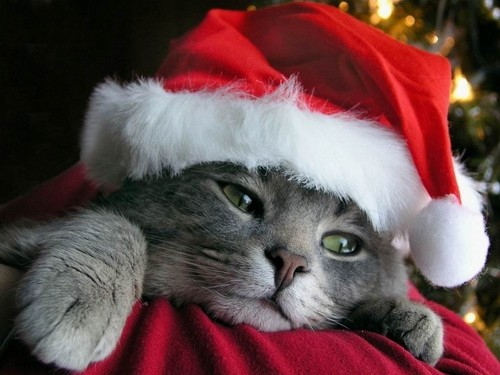 圣诞节 Kitten