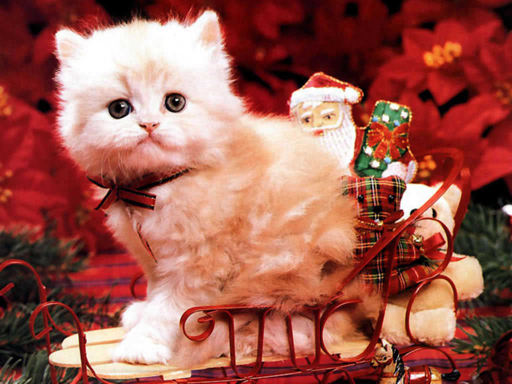 Christmas images Christmas Kitten HD wallpaper and background photos ...