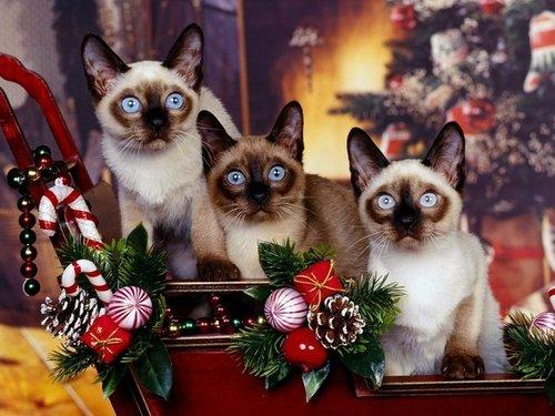 クリスマス 子猫