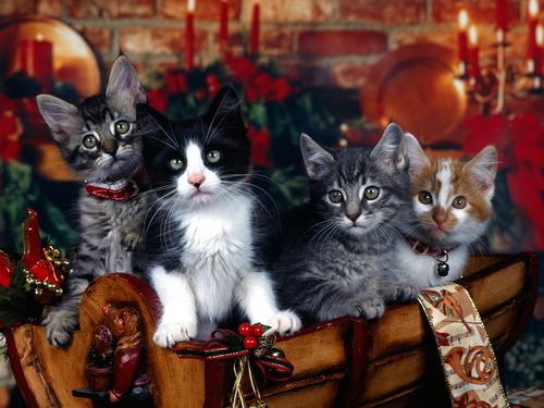 Рождество Котята
