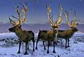クリスマス Reindeer ... クリスマス 2008