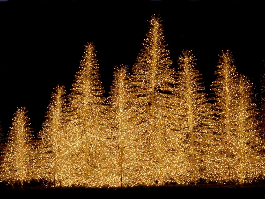 Led Lit Christmas Trees