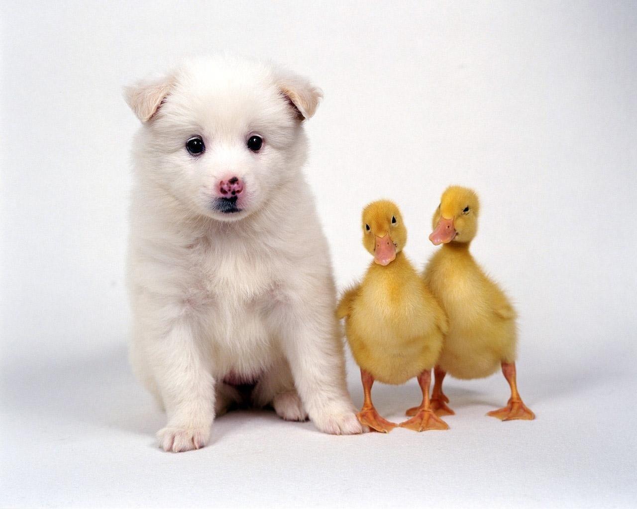 Cute Friends - Domestic Animals Wallpaper (2785606) - Fanpop