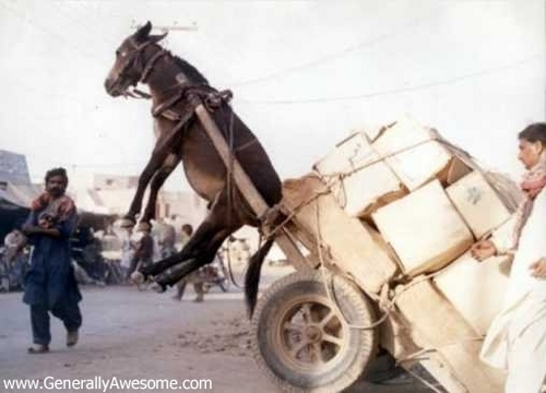"Donkey ""Pulling"" cart, troli"