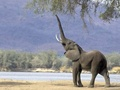 Elephant - wild-animals wallpaper