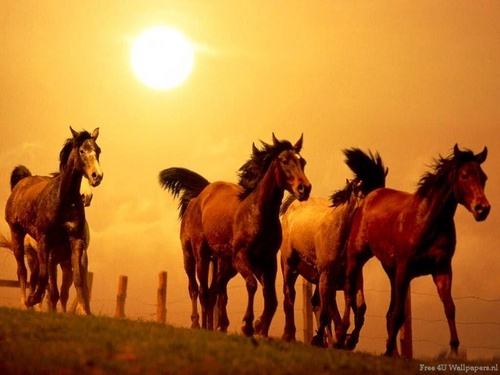 Domestic Animals wallpaper entitled Horses