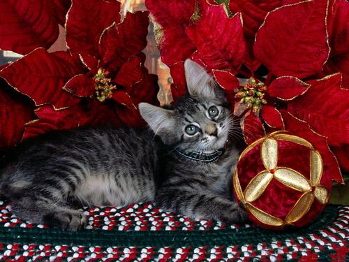Kitten Under cây