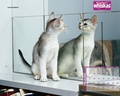 Mirror Cat - domestic-animals wallpaper