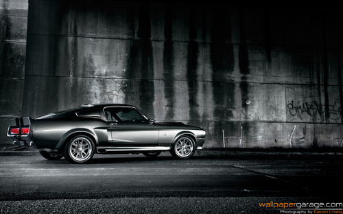 Shelby Mustang GT500 - cars Wallpaper