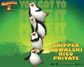 The Penguins - madagascar wallpaper