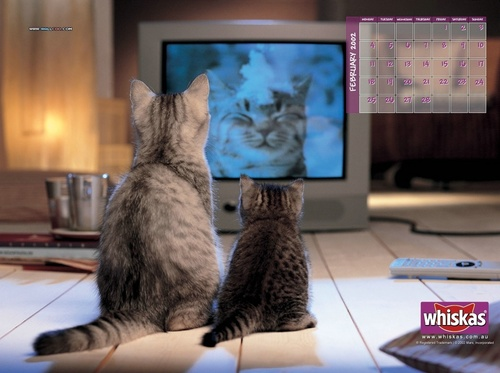 Domestic Animals wallpaper entitled Computer Cats