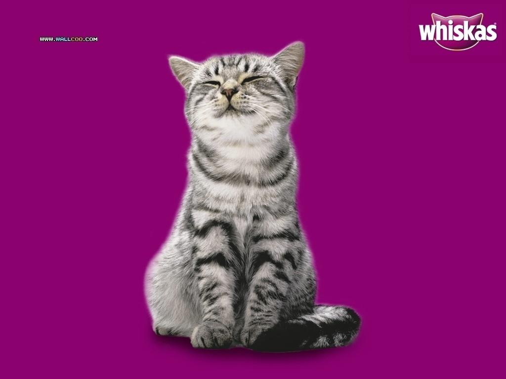 Cat Food Advert