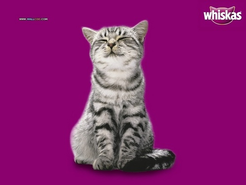 Whiskas Kitty