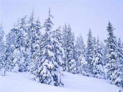 Winter fondo de pantalla