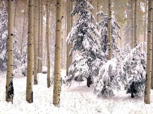 Winter پیپر وال