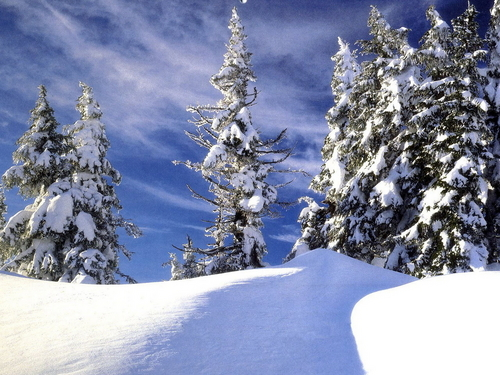 Winter দেওয়ালপত্র