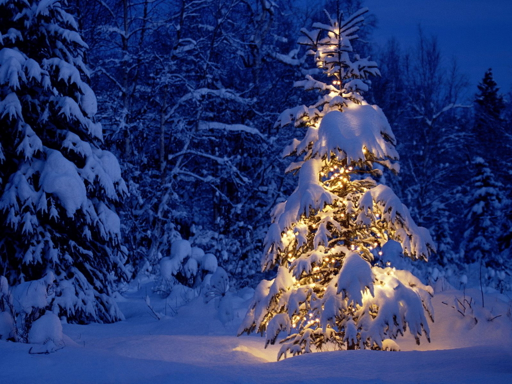 find beautiful winter wallpapers - photo #19