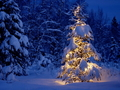 Winter wallpapers - winter wallpaper