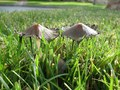 wild mushrooms - gardening photo