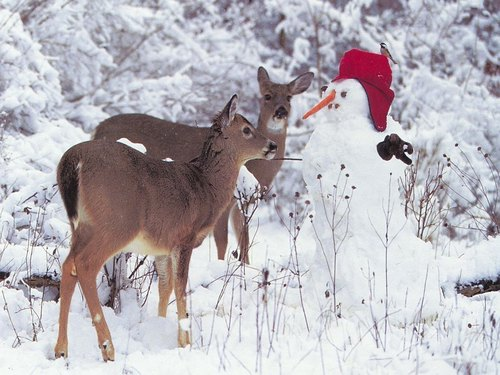Christmas wallpaper entitled Deer and Snowman w'paper  (Christmas 2008)